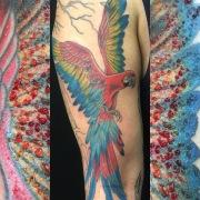 Red macaw, with beautiful ephemeral ruby frame! © Megan Oliver meganolivertattoos.com