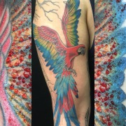Red macaw, with beautiful ephemeral ruby frame! © Megan Oliver meganolivertattoos.com